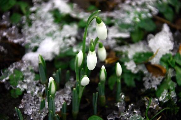 fleurs neige