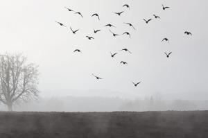 fog-66267_640