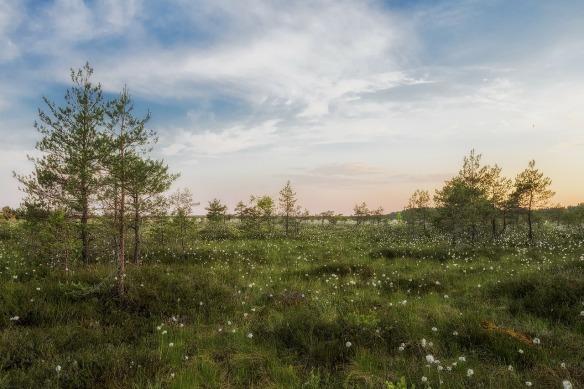 estonia-319626_1280