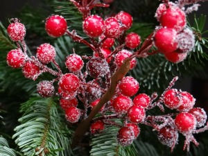 red-christmas-berries-67154_1280
