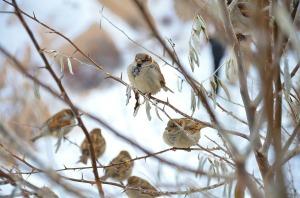 sparrow-292637_1280