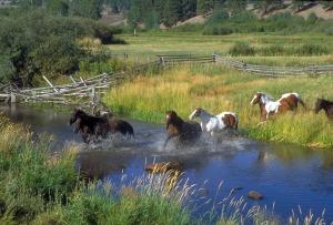 horses-78223_1280
