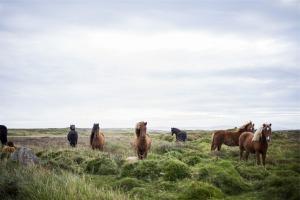 horses-593163_1280