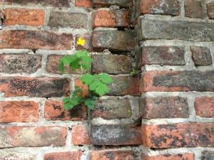 wall-210109_1280