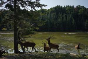 deer-441435_1280