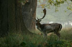 deer-664604_1280