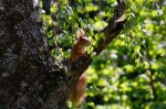 squirrel-765291_1280