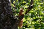 squirrel-765291_1280