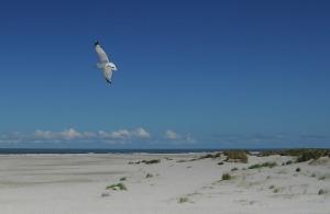 seagull-555738_960_720