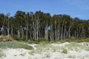 dune-899552_960_720