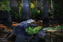 alligator-170134__180