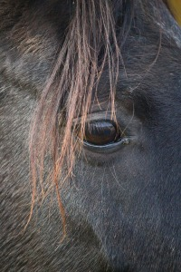 horse-1051610_1920