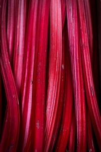 rhubarb-839618_1280