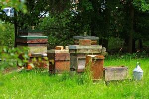 beehive-163989_1280