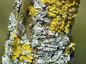lichen-100435_1280