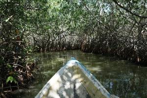 mangroves-1153232_640
