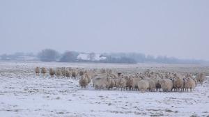 winter-1205246_640