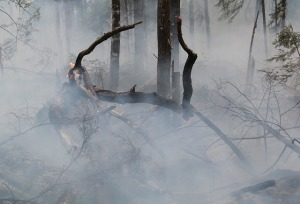forest-fire-424388_640