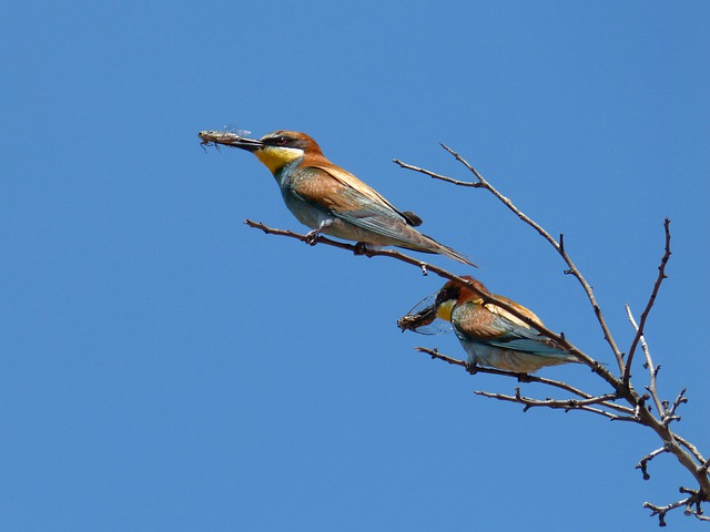 bee-eater-4438458_640