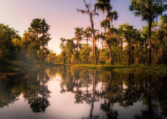 swamp-4544970_640